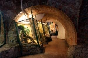 Pecsi-akvarium-terrarium-Pecs